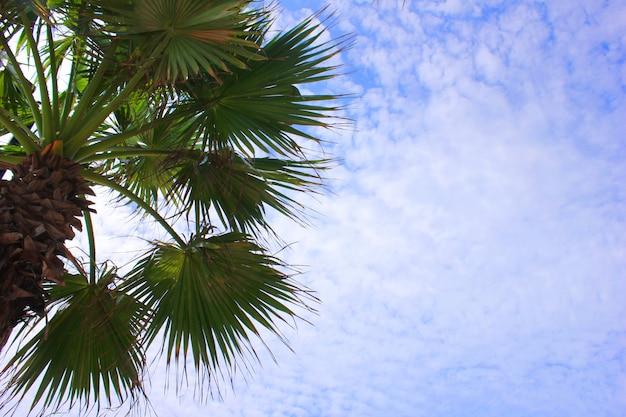 Palmeira verde contra o céu azul em um dia ensolarado. férias de verâo. copie o espaço.
