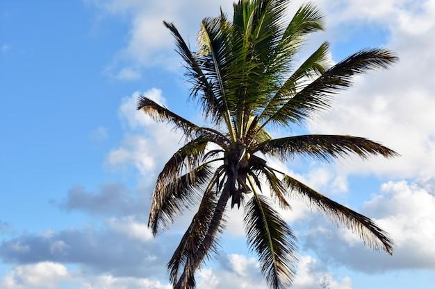 Palmeira verde contra o céu azul