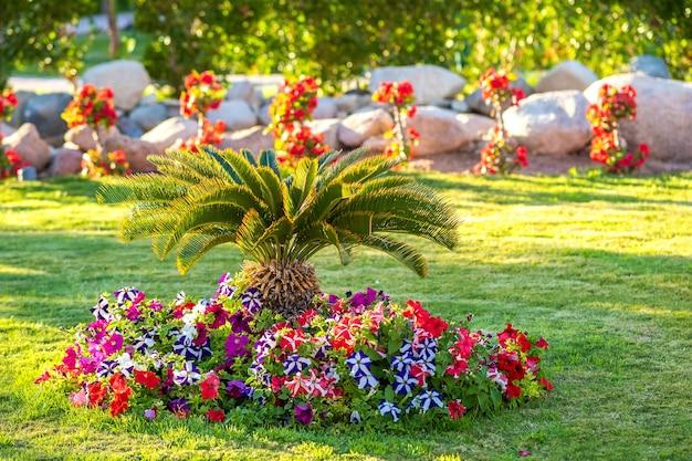 Palmeira verde pequena rodeada de flores desabrochando brilhantes crescendo no gramado coberto de grama no quintal do hotel tropical.