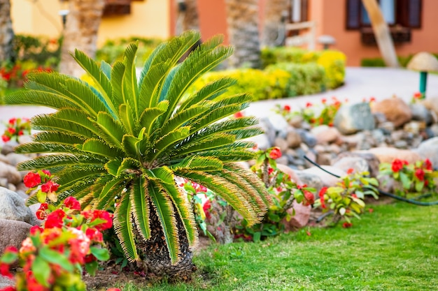 Palmeira verde pequena rodeada de flores desabrochando brilhantes crescendo no gramado coberto de grama no quintal tropical.