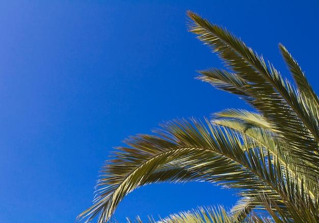 Palmeira vista abaixo do fundo do céu no verão no dia ensolarado.