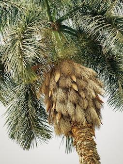 Palmeira, vista de baixo para cima.