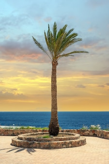 Palmeiras altas contra o fundo do mar e o céu claro do pôr do sol