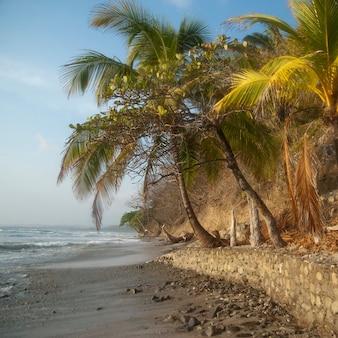 Palmeiras ao longo da costa da costa rica