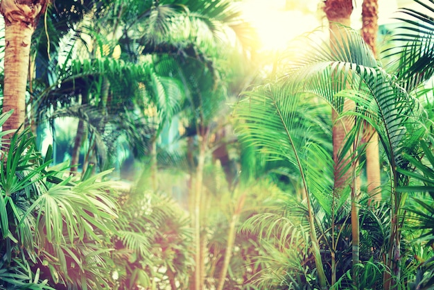 Palmeiras ao longo do céu. verão, feriado e conceito do curso com espaço da cópia. ramos de palma com efeito de luz do sol. vista da selva tropical