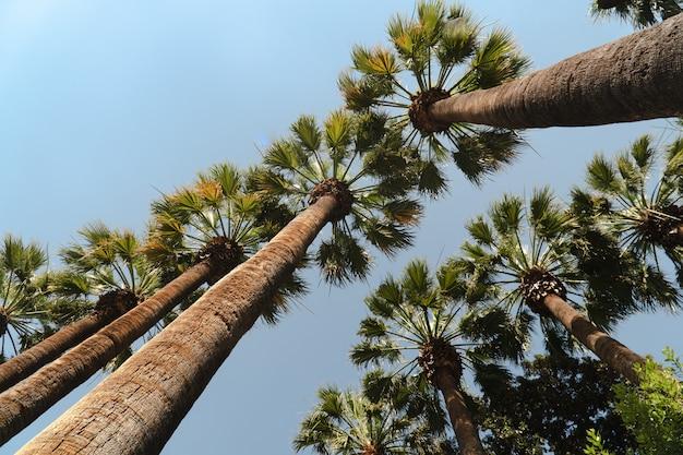 Palmeiras com céu azul no verão