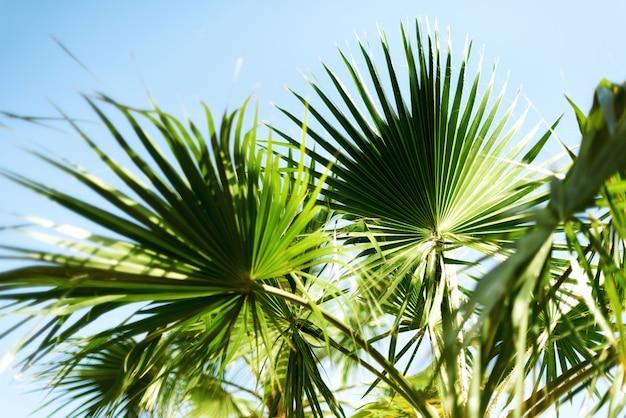 Palmeiras contra o céu azul com luzes do sol. fundo tropical com copysapce.