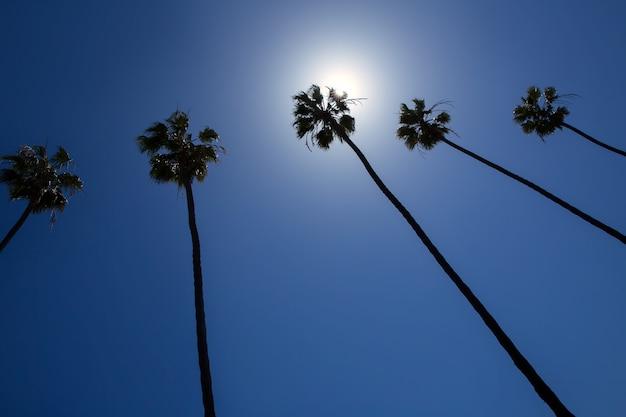 Palmeiras da califórnia no céu azul