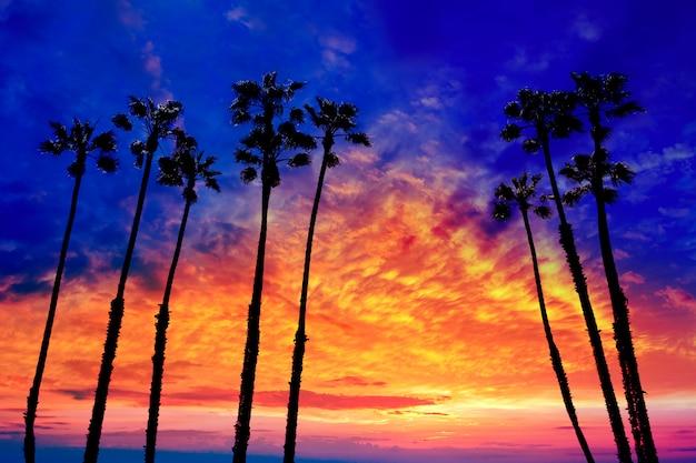 Palmeiras da califórnia pôr do sol com céu colorido