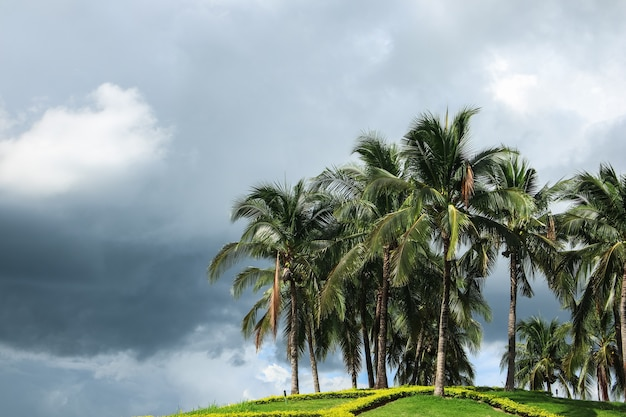 Palmeiras de coco contra o céu azul