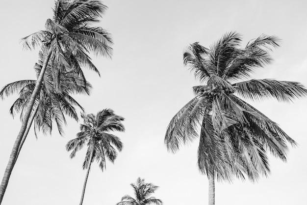 Palmeiras de coco exóticas tropicais solitárias contra o céu azul em dia de vento. neutro preto e branco