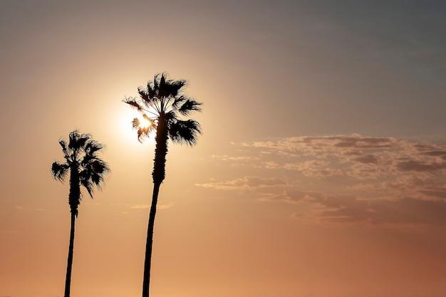 Palmeiras e céu colorido com lindo pôr do sol