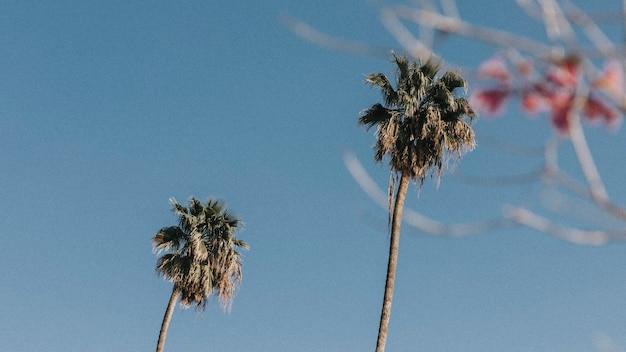 Palmeiras e flores no céu de verão
