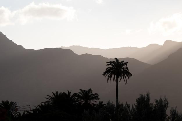 Palmeiras e montanhas enevoadas
