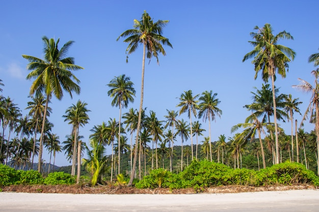 Palmeiras e o céu brilhante na praia tropical bonita na província tailândia de trat da ilha de koh kood.