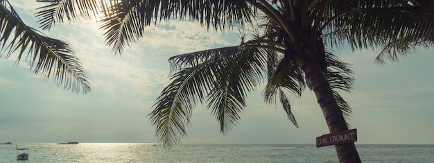 Palmeiras e oceano ao pôr do sol no sri lanka.