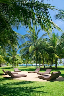 Palmeiras e redes em um resort