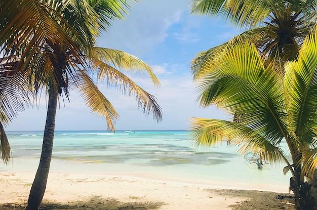 Palmeiras elevadas levam para o céu nublado na praia na república dominicana