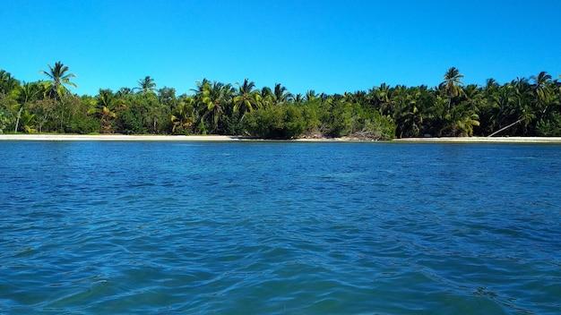 Palmeiras em uma praia arenosa. república dominicana