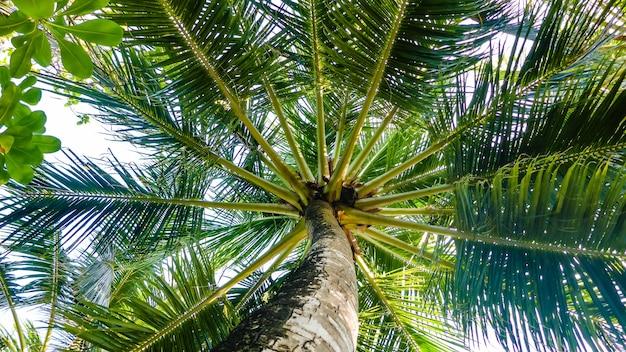 Palmeiras em uma vista do céu azul de baixo, maldivas.