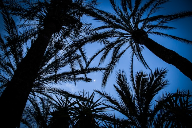 Palmeiras, mostrado silhueta, contra, a, noite, céu