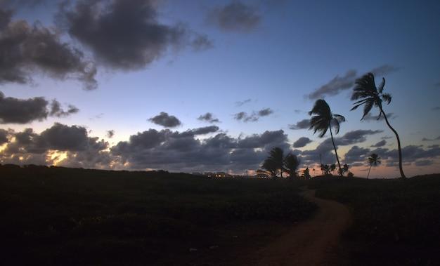 Palmeiras na costa do mar ao pôr do sol