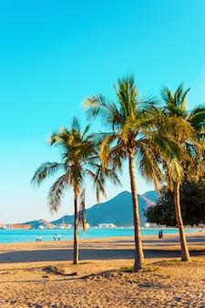 Palmeiras na costa do oceano índico. emirado de fujairah, emirados árabes unidos. foto tonificada brilhante.