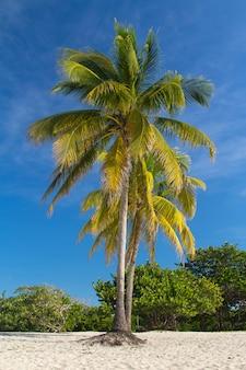 Palmeiras na paisagem da praia