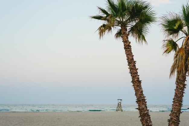 Palmeiras na praia ao pôr do sol.