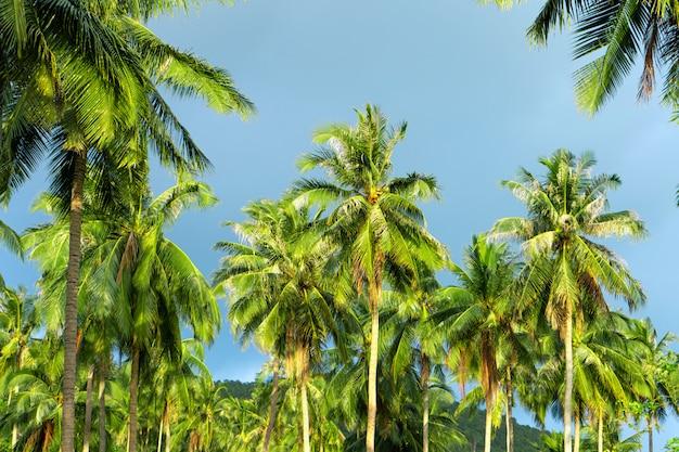 Palmeiras na selva tropical