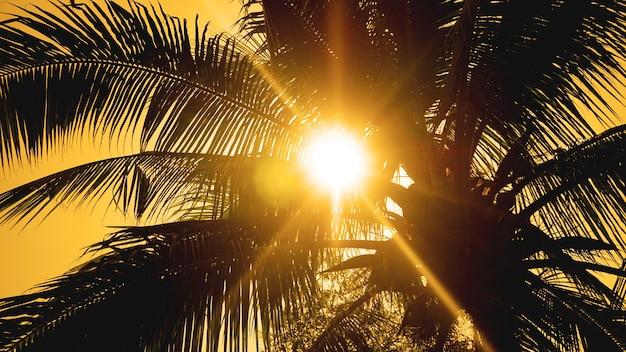 Palmeiras no fundo de um belo pôr do sol. folhas de palmeira tropical, fundo com padrão floral, foto real