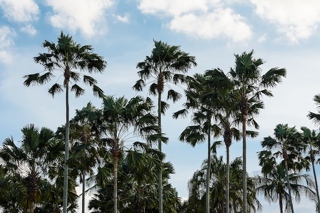 Palmeiras no lindo céu azul