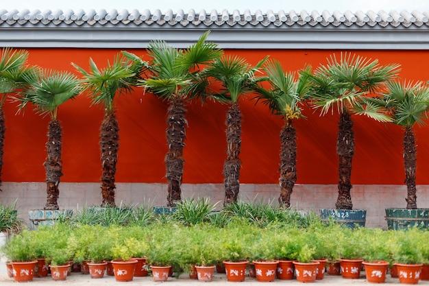 Palmeiras perto das paredes