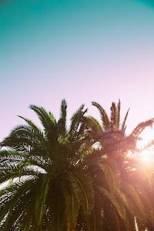 Palmeiras ramos contra o céu natureza paisagem na costa do mar oceano fundo tropical