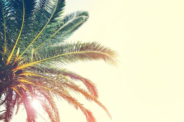 Palmeiras ramos contra o céu natureza paisagem no mar oceano costa