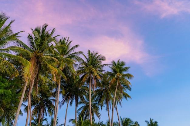 Palmeiras tropicais contra um céu azul-roxo do por do sol. pôr do sol nos trópicos