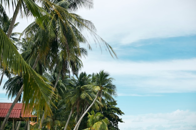 Palmeiras tropicais do coco na opinião de perspectiva do litoral e do céu azul. horário de verão