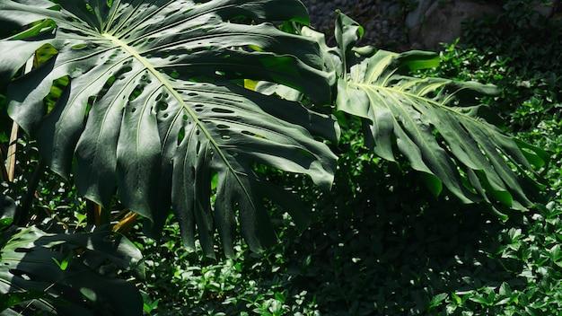Palmeiras tropicais e folhas de bananeira, fundo com padrão floral, foto real