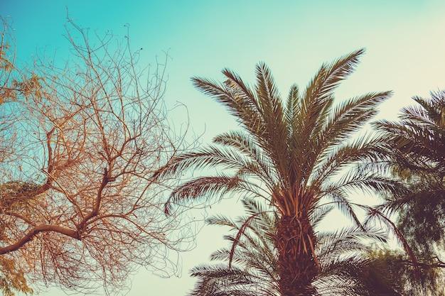 Palmeiras tropicais em um céu ao pôr do sol