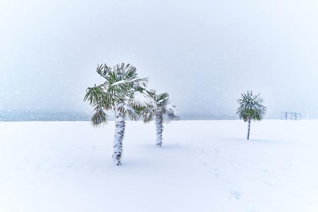 Palmeiras tropicais perenes cobertas de neve