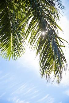 Palmeiras tropicais selva natureza paisagem fundo férias viagens design view. céu azul. palmeira.