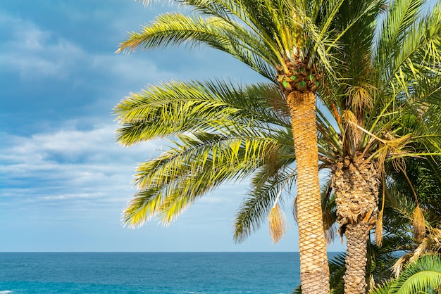 Palmeiras verdes bonitas contra o céu ensolarado azul com nuvens claras e oceano no fundo.