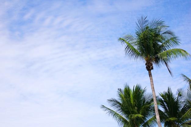 Palmeiras verdes contra o céu azul em um dia ensolarado.