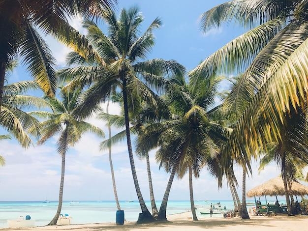 Palmeiras verdes levantam-se para o céu na praia ensolarada