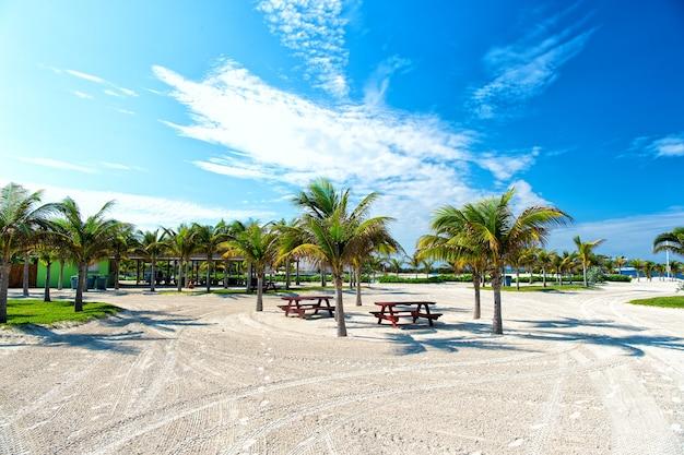 Palmeiras verdes na costa de uma praia arenosa perto do oceano ou da água do mar. dia ensolarado ao ar livre no fundo do céu azul natural
