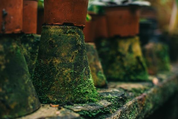 Panelas de barro cobertas de musgo close-up