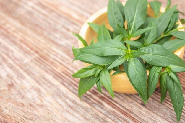Paniculata verde de andrographis ou chireta verde na tabela de madeira.