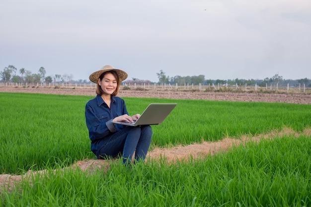 Pano asiático do chapéu e do brim do desgaste de mulher do fazendeiro usando o computador portátil no campo do arroz