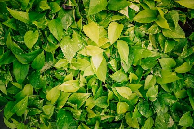 Pano de fundo de folhas verdes frescas