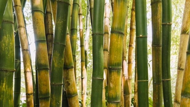 Pano de fundo de hastes de bambu